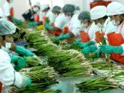 Contrato-de-compra-venta-internacional-e-indemnización-por-exportación-de-frutas