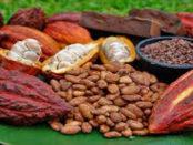 cacao-peruano
